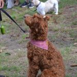 blessing of animals 2021 (4)